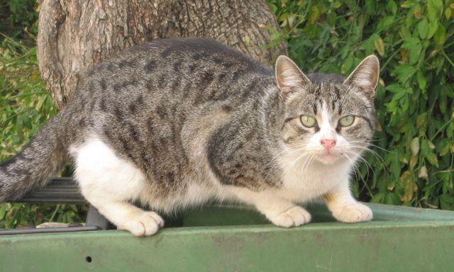 3-cat_12