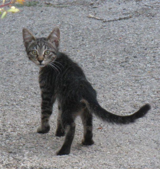 2-cat2